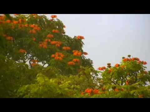 Invasive Species Killing Hawaiian Rainforest