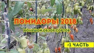 Обзор сортов помидор 2018 ! На открытом грунте