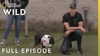 The Tormentor (Full Episode) | Dog Impossible