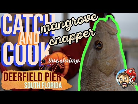LIVE SHRIMP 🦐 SNAPPER ON DEERFIELD PIER 🎣🐟 CATCH & COOK 🎣🔥 FLORIDA PIER FISHING ADVENTURE