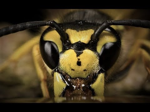 Killer Wasp Attack - Attacked by WASPS - YouTube