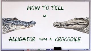 How to tell an alligator from a crocodile
