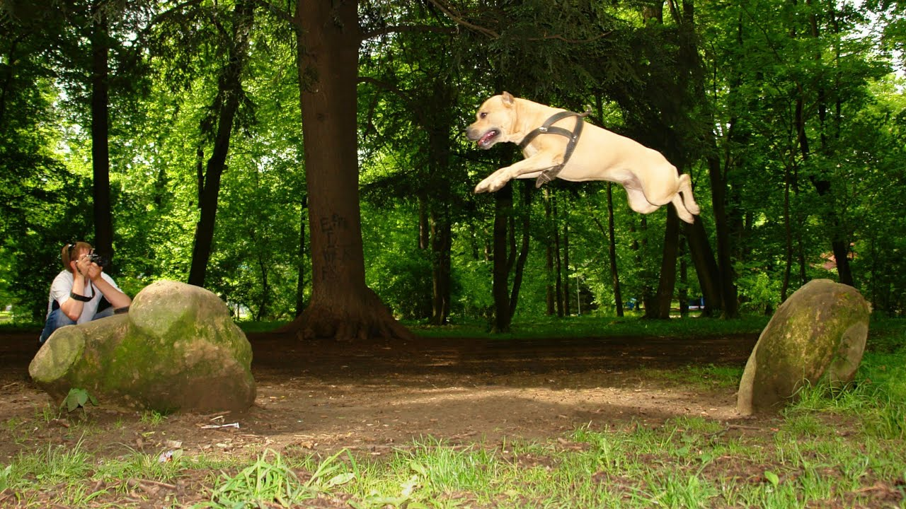 Parkour Dog Training