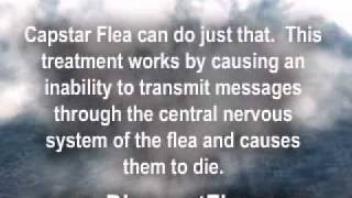 Capstar Flea Relief for Dogs and Cats