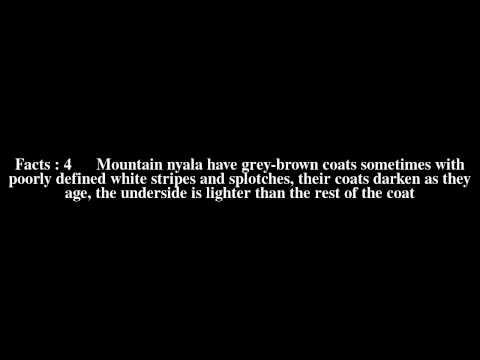 Mountain nyala Top # 9 Facts