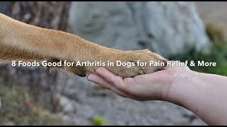 8 Foods Good For Arthritis in Dogs For Pain Relief & More