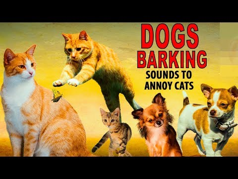 SOUNDS TO ANNOY CATS | Dogs barking | HD