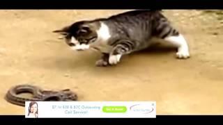 Video Funny Cats!||Funny Cats Compilation (Most Popular) Part 1 download MP3, 3GP, MP4, WEBM, AVI, FLV Juli 2018