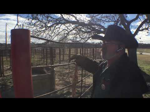 Colt General open audition / Shot at the local stock yard