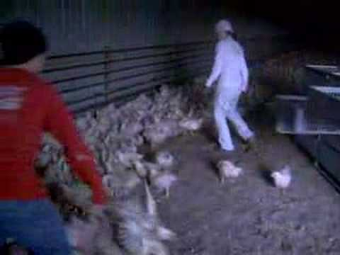 Chicken Madness1 Youtube