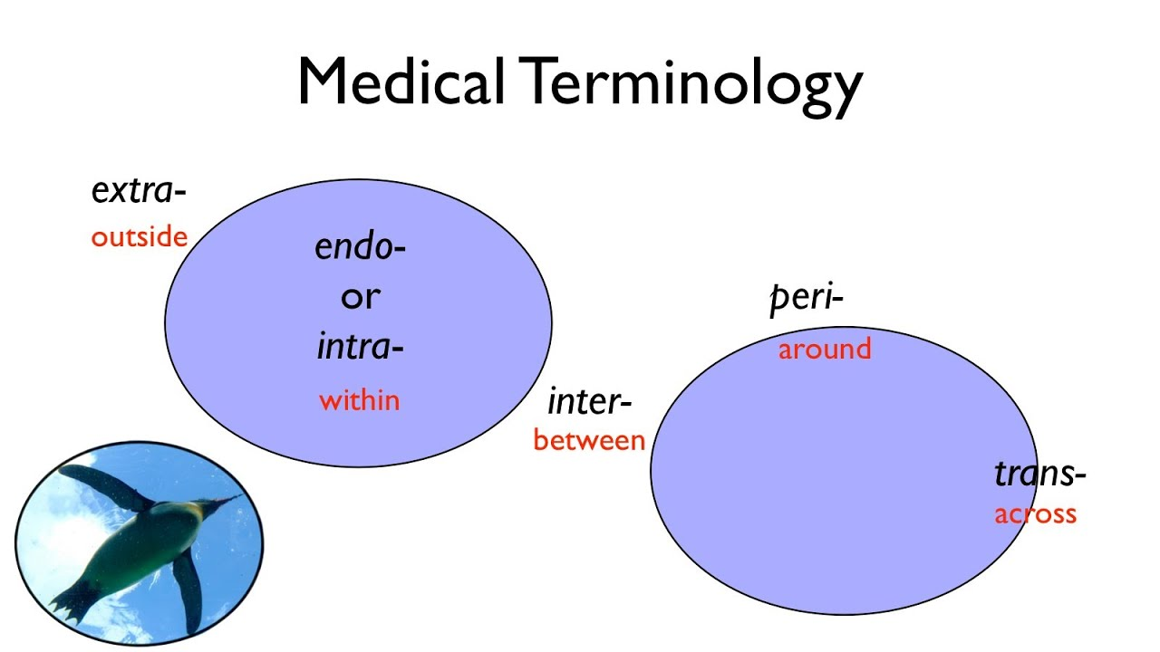 Medical Terminology - YouTube