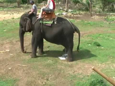 Elephant Piss