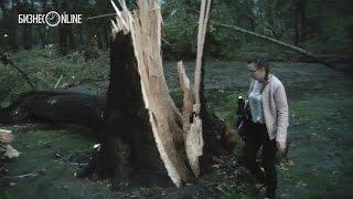 Зеленая зона Нэфис после урагана превратилась в парк Юрского периода