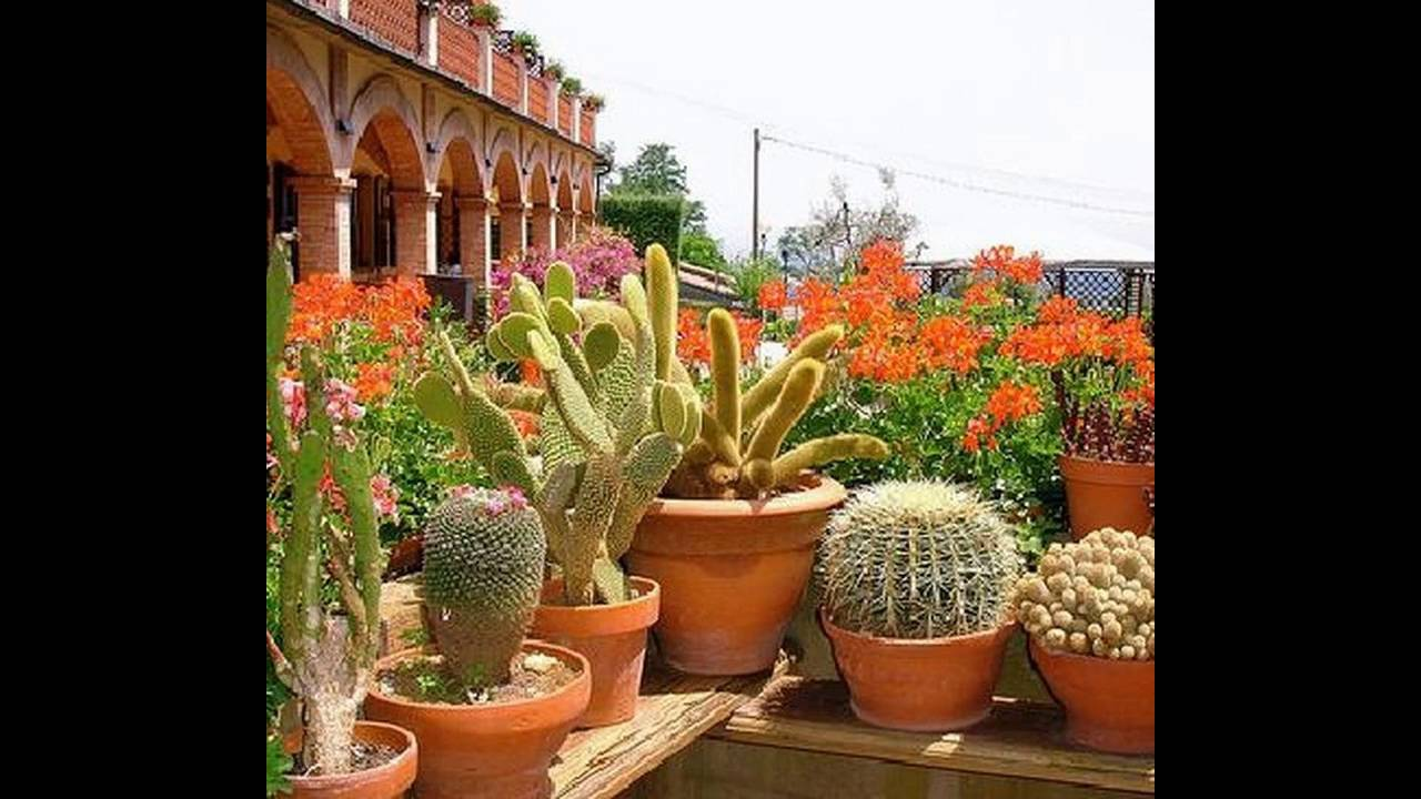 Cactus Garden Design Ideas