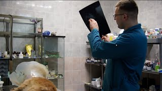 Собака после ДТП выздоровела и снова в строю