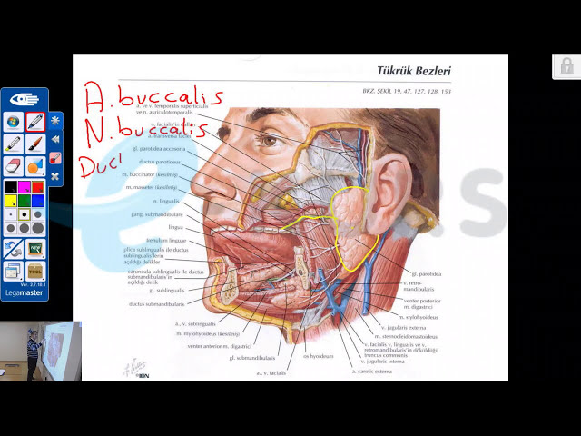 nettekurs.com Online DUS Kursu Tanıtım Dersleri - Anatomi / Prof. Dr. Cemil H.