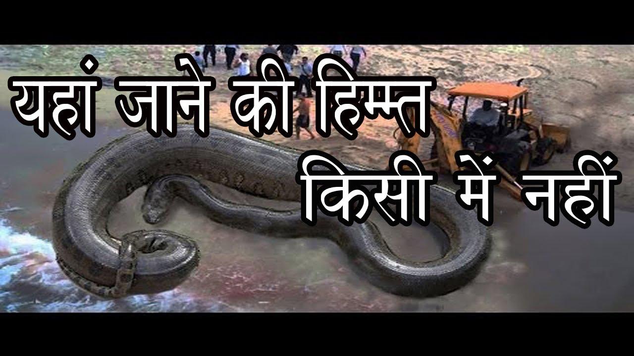 Think, that Youtube snake island brazil