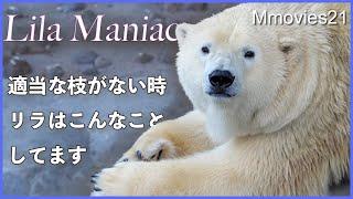 手持ち無沙汰な時【ホッキョクグマ】リラはこんな行動をする Polar Bear Life