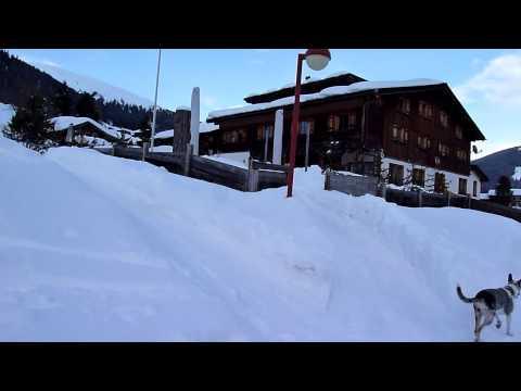 Yara - Jack Mack's Win Ribhinn (riiwinn) 26.06.09 at Davos 15.02. - 18.02.13 Video 3