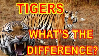 Tigers: What