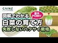 カインズ野菜図鑑 ハクサイの育て方 の動画、YouTube動画。