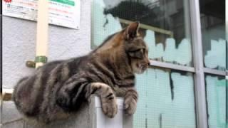 ダルビッシュ有・松雪泰子の弟、傷害容疑で逮捕~つボイノリオ 2013-10-1...