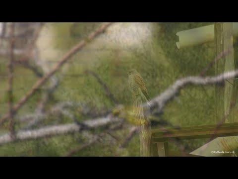 Torre del Greco, la natura ai tempi del Covid-19: il documentario è dal balcone