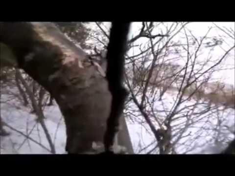 I Wanna Be a Squirrel! (Dave Brockie Experience)