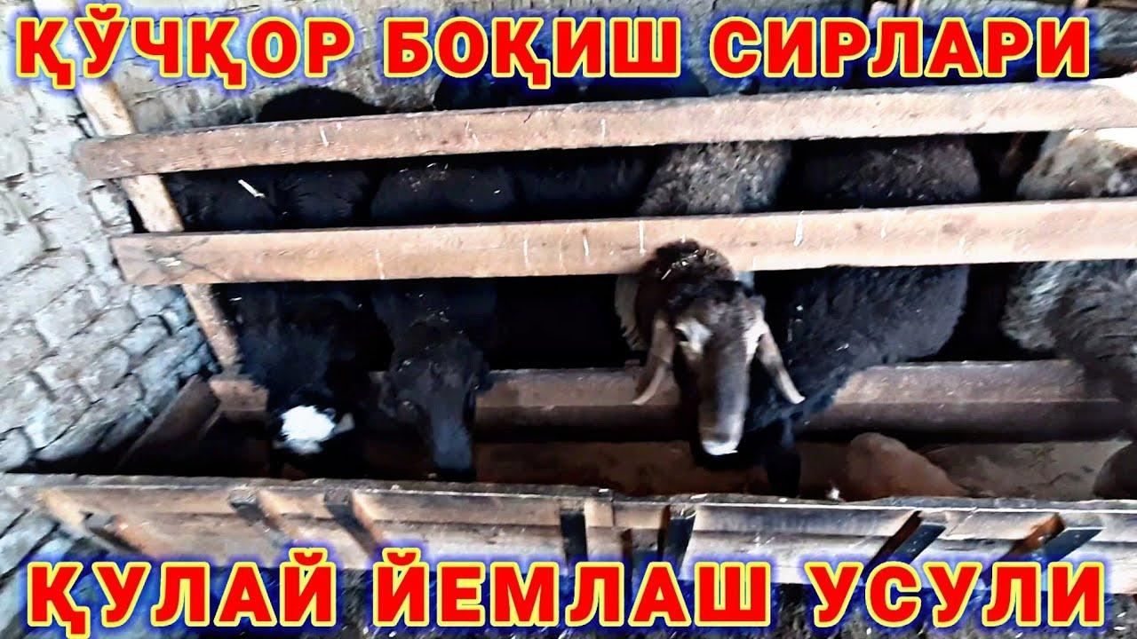 ҚЎЧҚОР БОҚИШ СИРЛАРИ УЙ ШАРОИТИДА. MyTub.uz TAS-IX