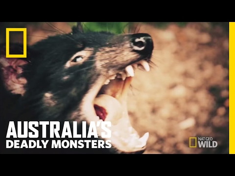 Australia's Top 3 Stone Cold Killers | Australia's Deadly Monsters