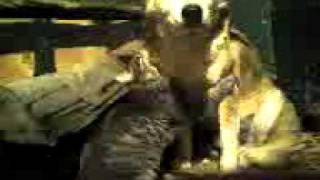 кот пристает к собаке