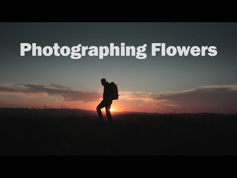 tips-for-photographing-wild-flowers-during-sunset-|-landscape-photography