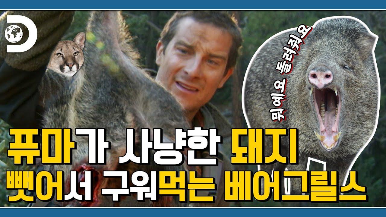 애리조나 사막이 생존하기 돼지게 좋다는 베어형! 🐻: 생존? 난 무조건 돼지! [Man VS Wild]