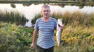 Рыбалка на щуку 26 августа 2021 на пруду Ловля на спиннинг