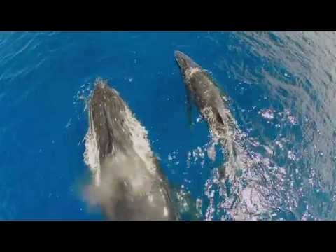 DJI - Up Close with the Whales of Tonga
