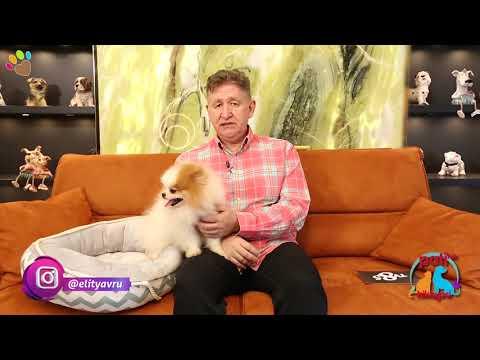 Kısırlaştırılmış köpeğin yanına erkek mi dişi mi köpek sahiplenmek gerekir ?