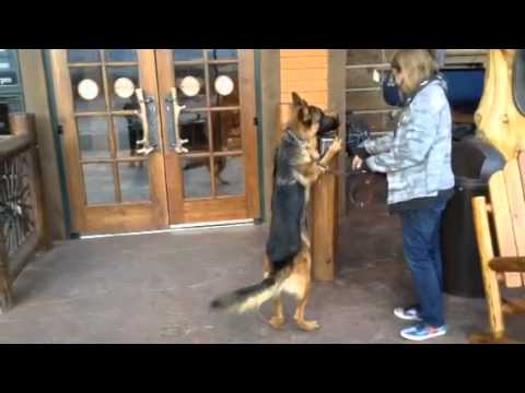 Service dog task: Automatic door buttons