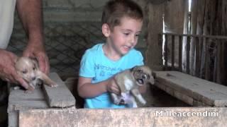 子犬の犬 Facebook: http://www.facebook.com/milleaccendinifunpage Yo...
