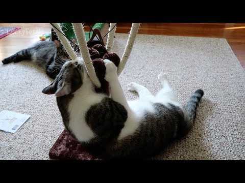 Majestic Pet Sherpa Play Post Cat Product Review Cat Toy Scratching Post