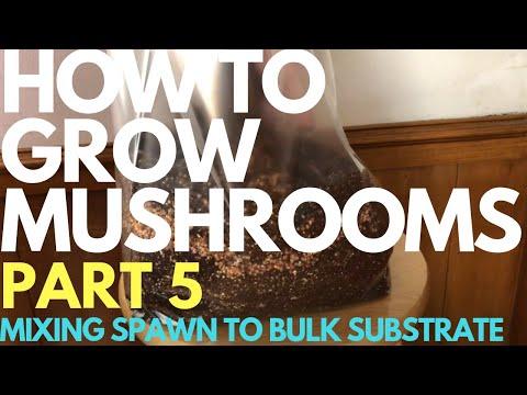 How To Grow Mushrooms - Part 5 - Mixing Spawn To Bulk