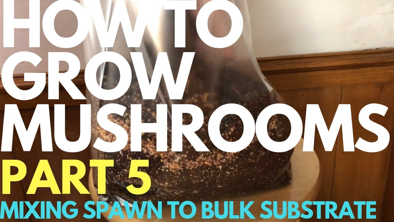 9 03 MB) How To Grow Mushrooms - Part 5 - Mixing Spawn To Bulk