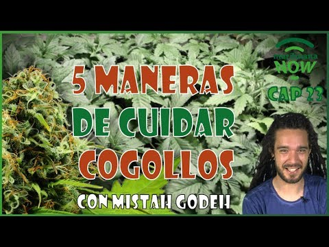 5 Trucos para cultivo de cogollos grandes de marihuana. Preparados para Feria Expogrow 2017. NOW 23