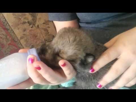 Puppy Bottle Feeding