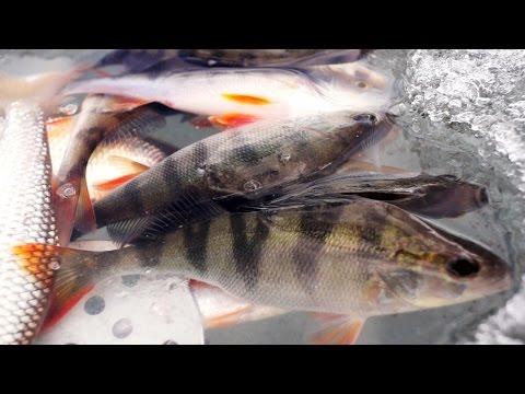 Супер уловистая,бюджетная прикормка для рыбы