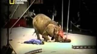 La venganza de los Animales(Animal Revenge)