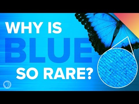 Why Is Blue So Rare In Nature?