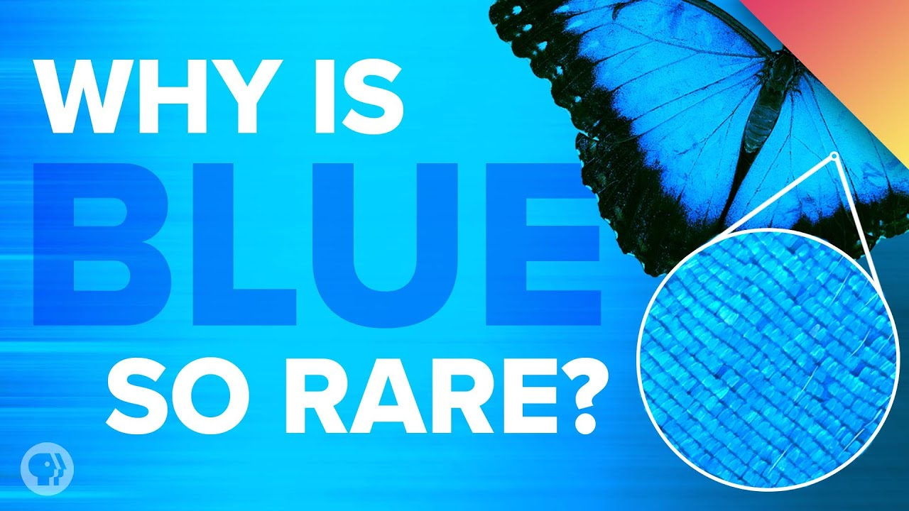 aqua blue color hex color why is blue so rare in nature youtube