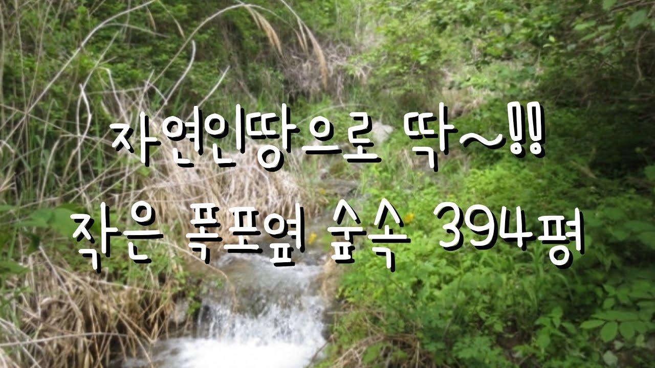 자연인땅394평 1400만원 숲속 작은 폭포가 흐르는환상적 아지트