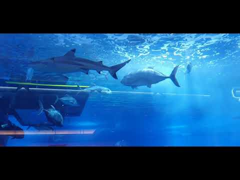 Sharks Dubai Aquarium Underwater Zoo Dubai Mall #