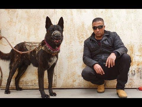 مغامرات مع كلب الذيب مع جمال العمواسي